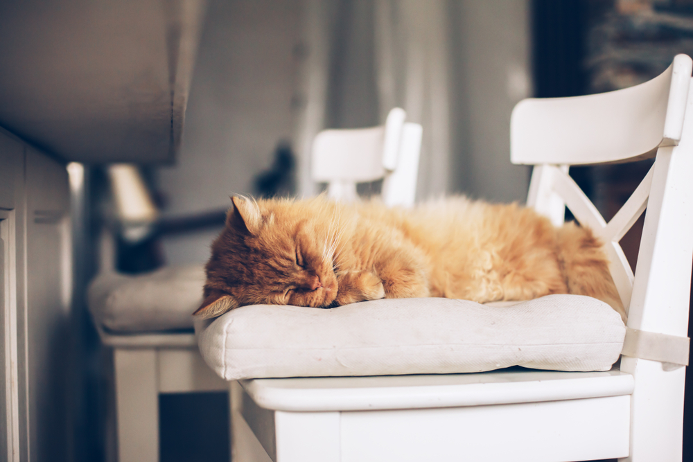 Providing pets with comfortable spaces to rest means they'll spend less time on your furniture.